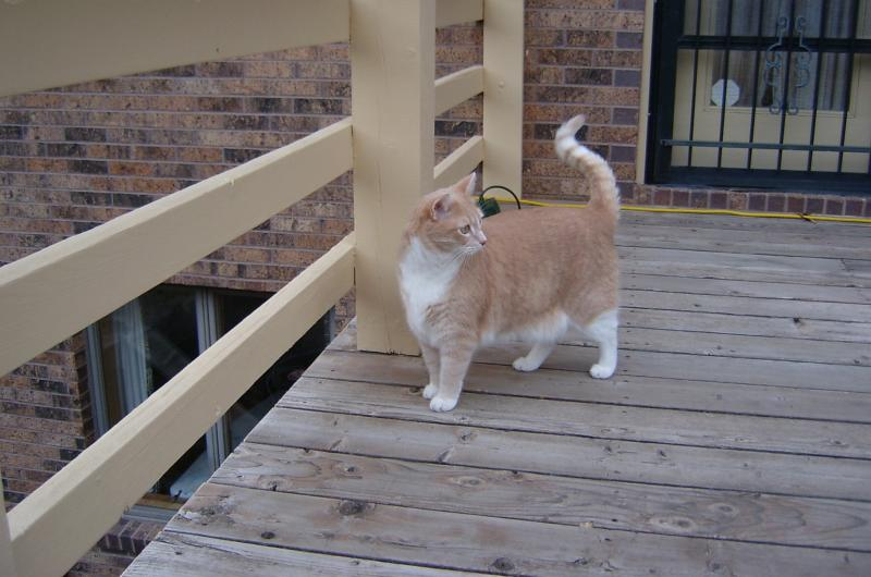 Catso on the Deck