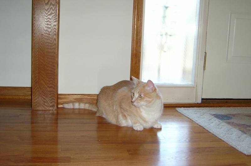 Guarding the Front Door