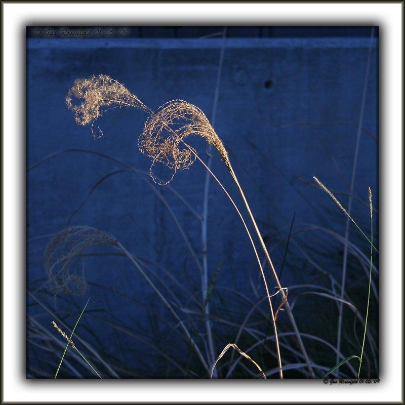 Grass Fractal Fountains & Blue Concrete