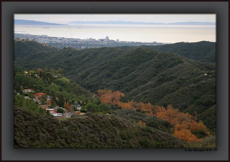 California Sycamore Gold - Falls Mettle For The Canyons Of The Santa Monicas