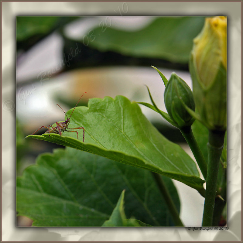 Happy Spring! This Buds For You!  err. . . Bugs For You!<br>This Buds For The Bug ;-)