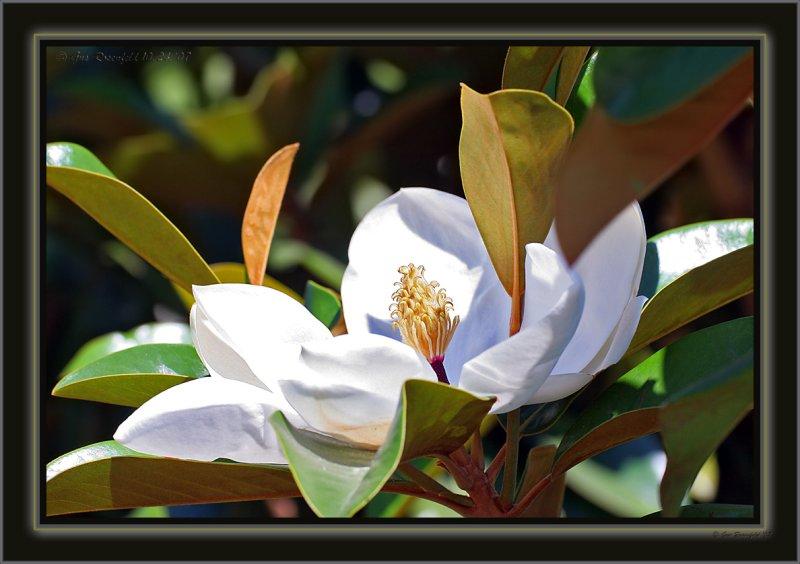 Magnolia Mayhem