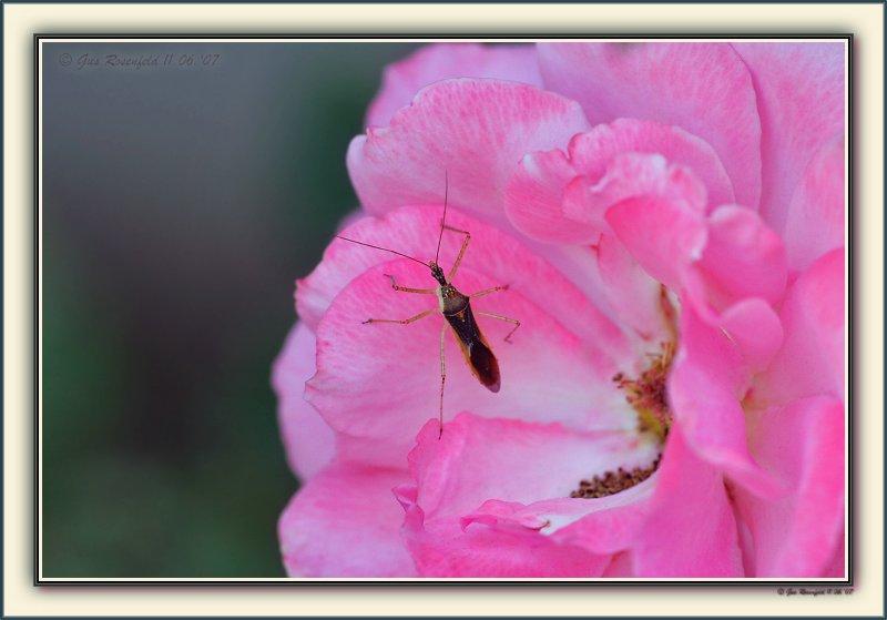 Bug On A Pink Cloud Rug