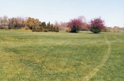 Looking west to the Butterfly Meadow, spring 1991