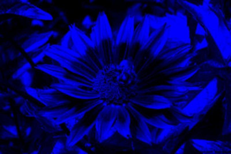 P6120964a2cc UV.jpg