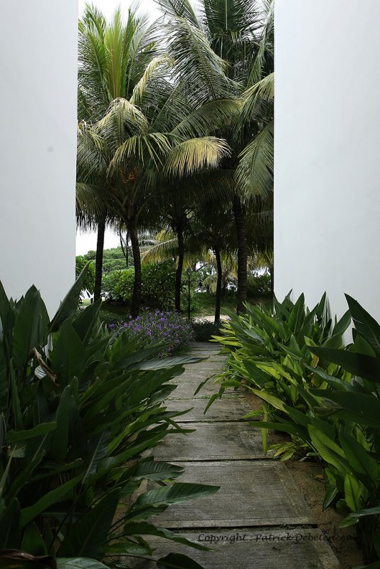 2 weeks on Mauritius island in march 2010 - 206MK3_8028_DxO WEB.jpg
