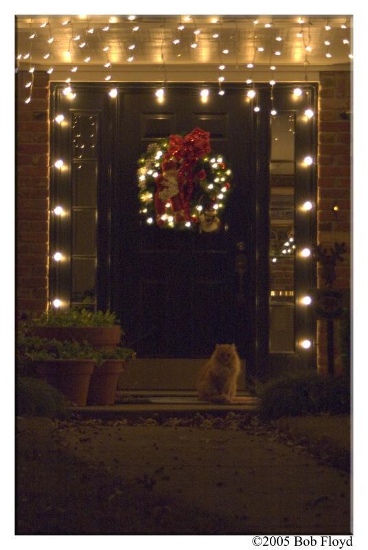 12/12 - Under the Lights