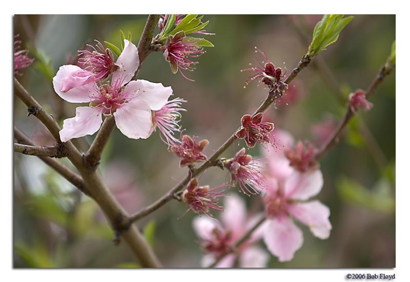3/23 - Challenge: Celebrate Spring