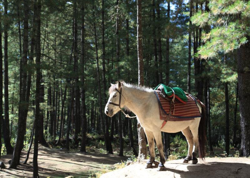 Resting pony