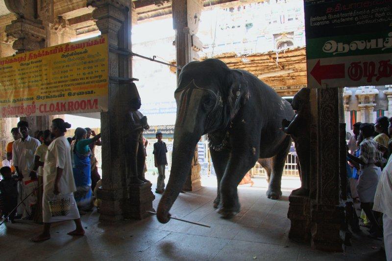 Sri Ranganathaswamy Temple elephant