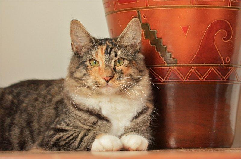 kitten Akira Laurie