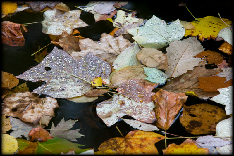 WM-2007-10-20--1293---Great-smoky---Alain-Trinckvel-2.jpg