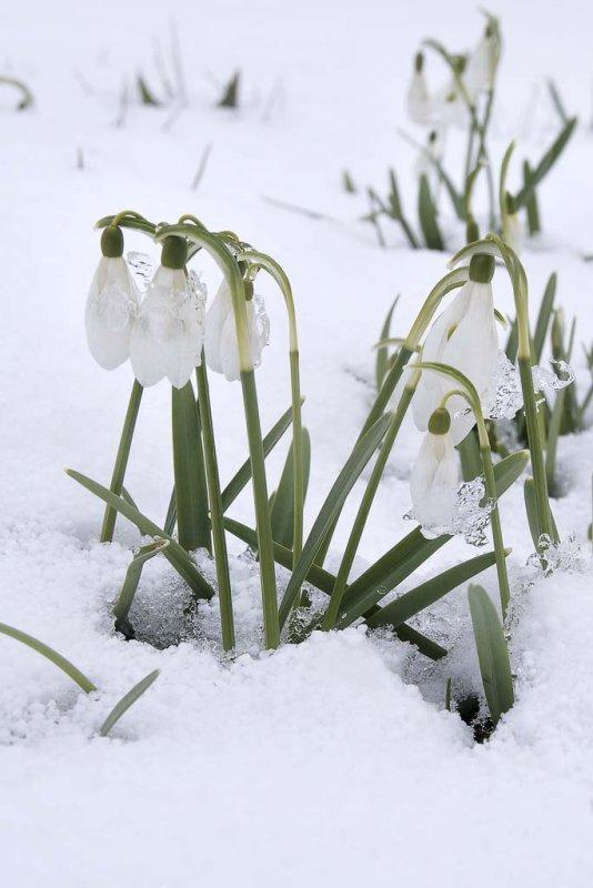 Spring has Sprung...Not!!