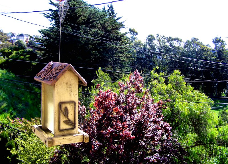 First Spring Day 2007 016.jpg
