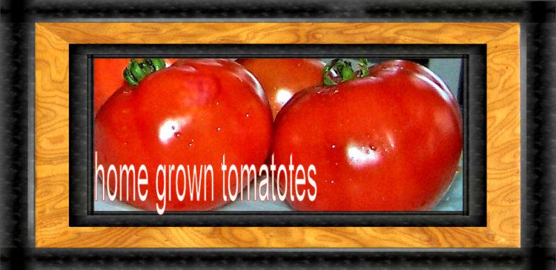 Toms tomatoes 2005.jpg