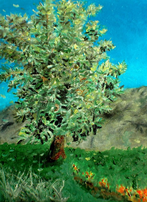 Pear Tree in Wy - August 2008