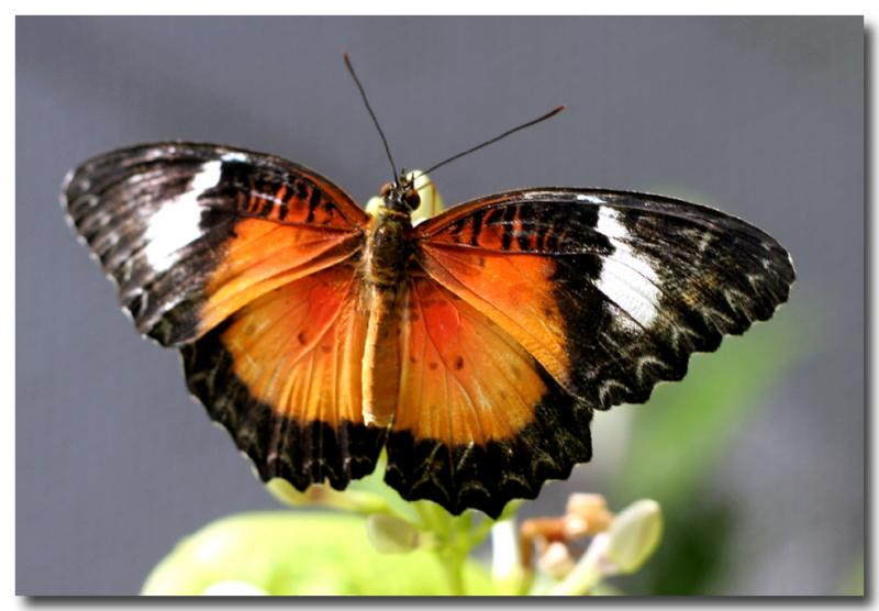 12 June 2005 - Butterfly Garden.jpg