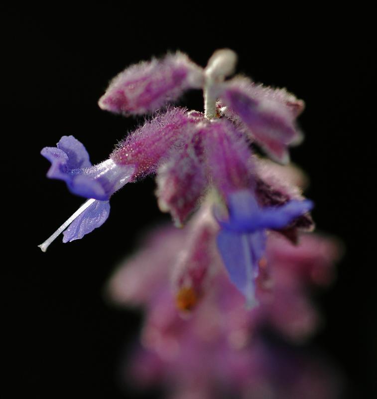 dof flower.jpg