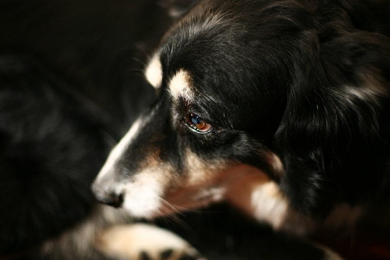 20080322 - Woof