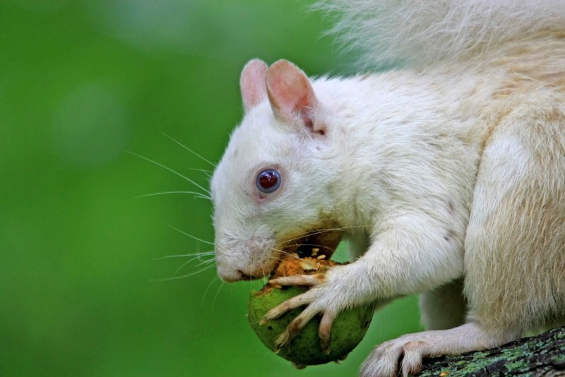 White Squirrel 08 /05