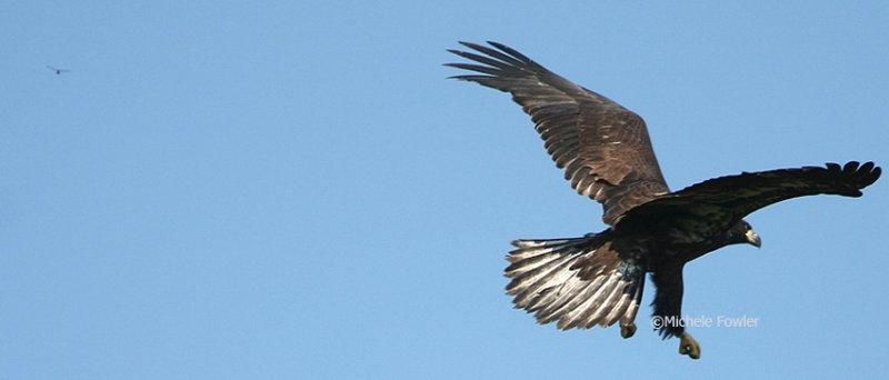 6-21-09 eaglet  dragon  228.jpg