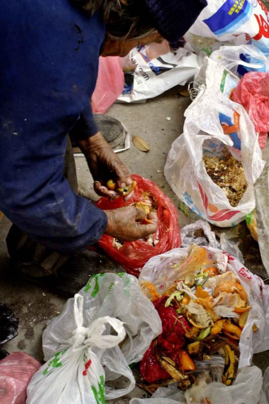 Sorting garbage for types of food.