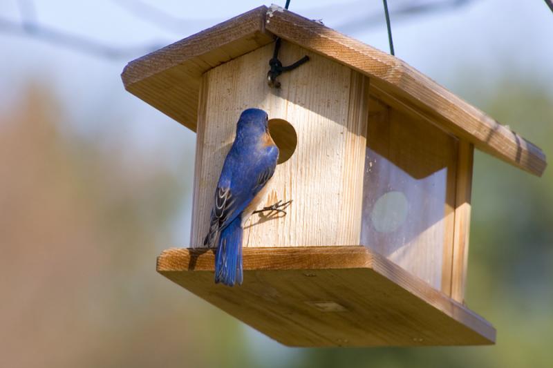 bluebird 272-10