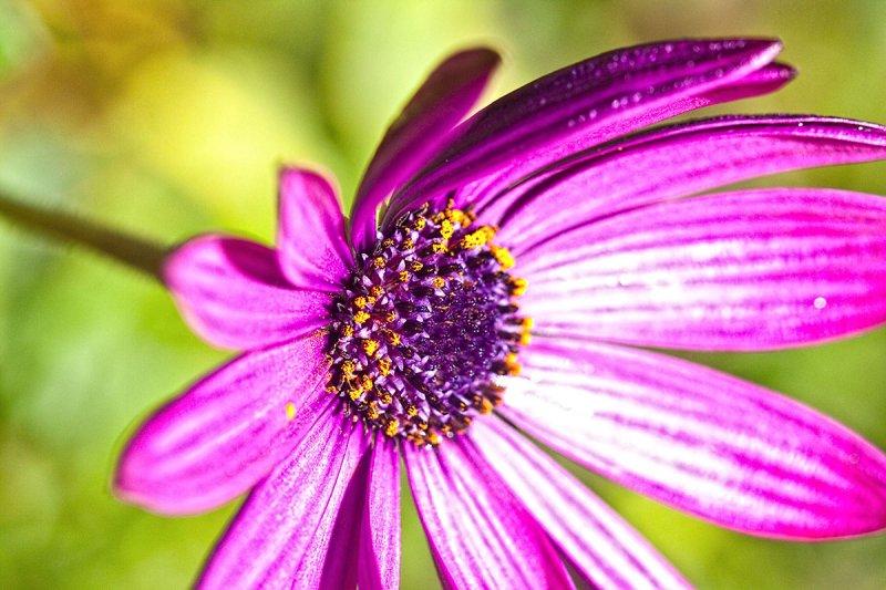 Purple flower  _MG_7227.jpg