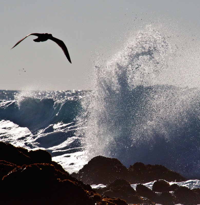 Wings and Wave _MG_4041.jpg
