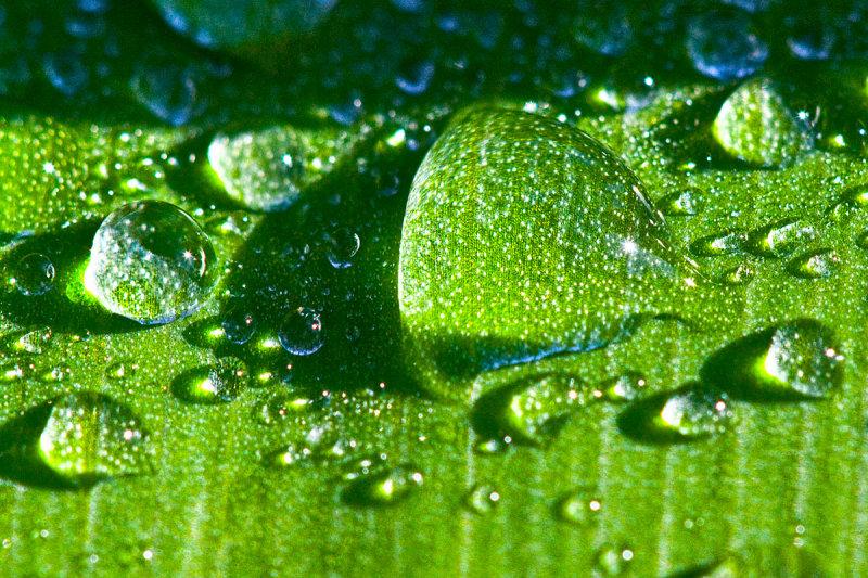 Green magnified  _MG_7207 p.jpg