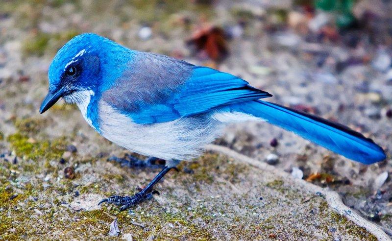 Blue but chipper  _MG_7731.jpg