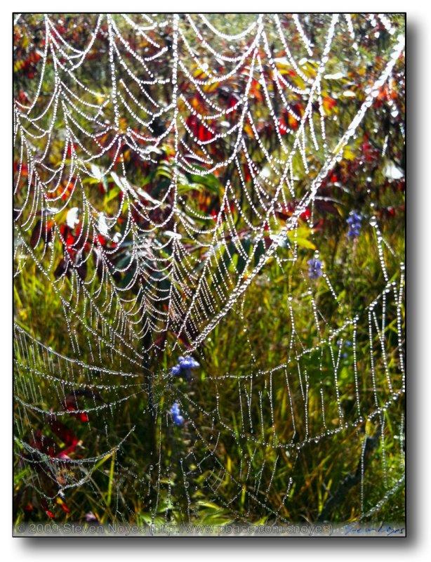 Caught in the Web (Marengo, Il)