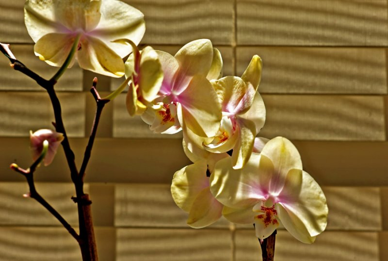 Sherris Flowers