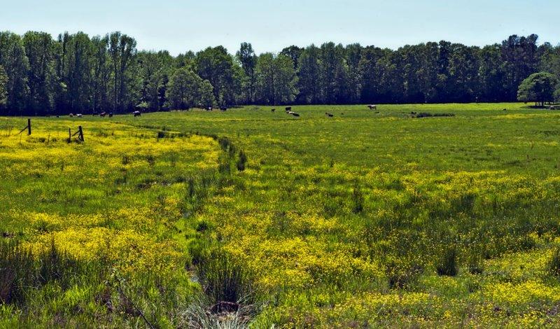 Springtime Pastoral