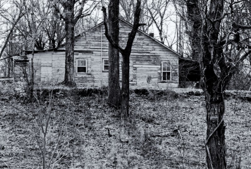 The Old House in the Trees