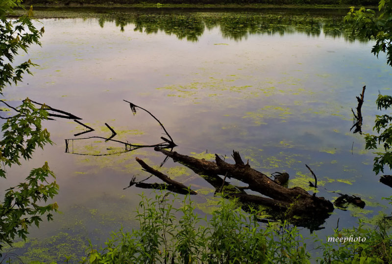 Pond, Sunrise