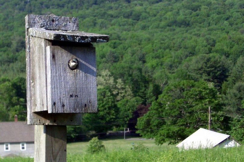 Birdhouse in Berkshires