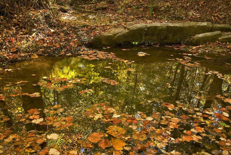 071103-creek-062.jpg