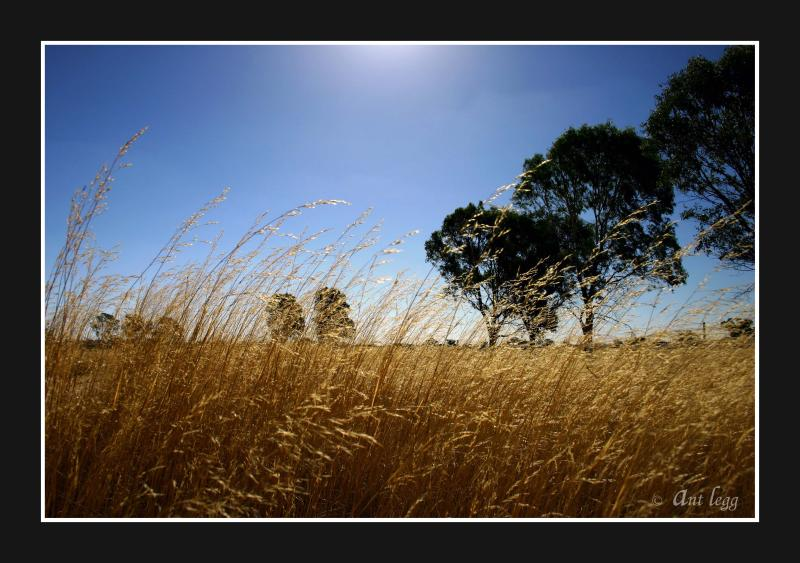dry grass & sunshine