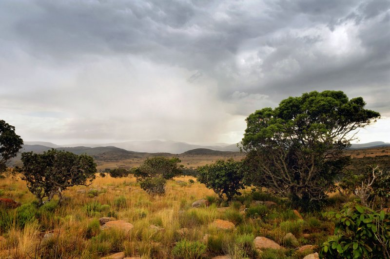 South African Highveld