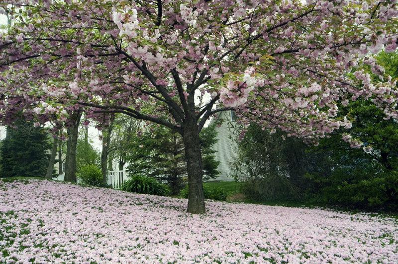 Spring Flower Snow