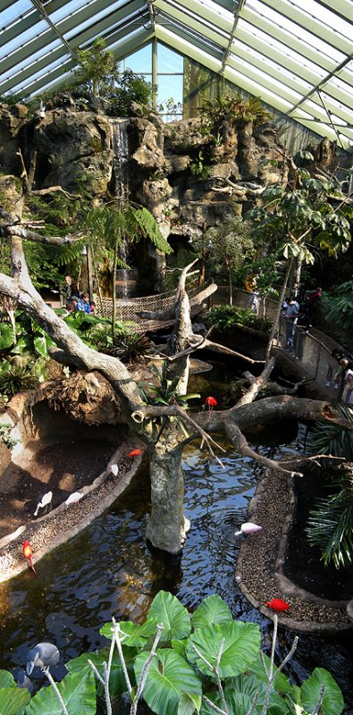 Rain_Forest_Buffalo_Zoo.jpg