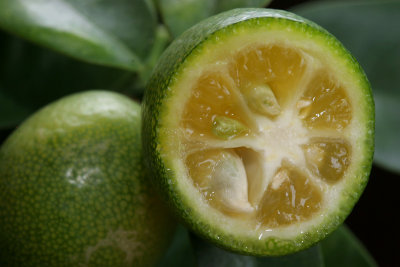 Lime (cut-section)