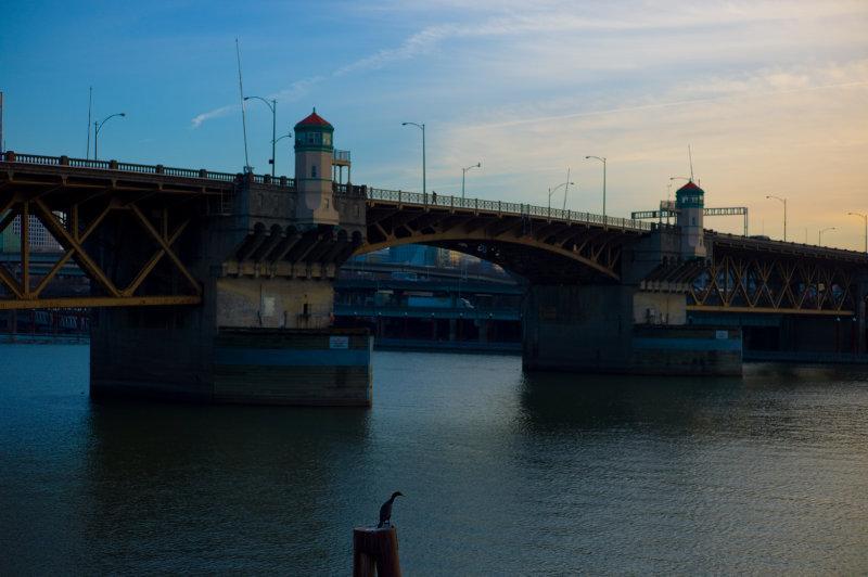 Bird  Bridge