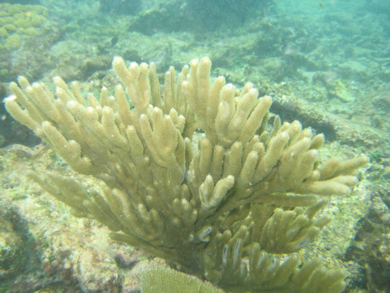 Part of the reef was actually still alive