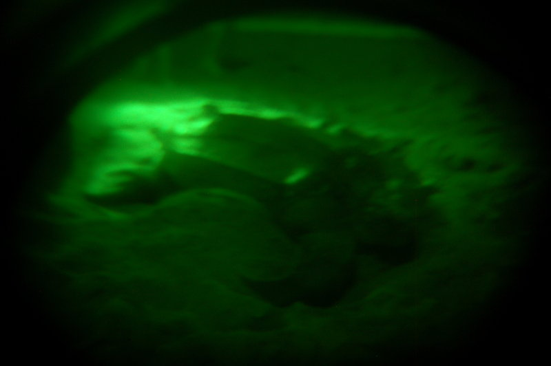 Leatherback Turtle in nightvision goggles