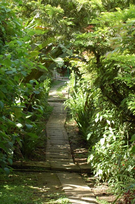 Asa Wright Path