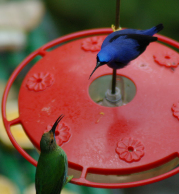 Honeycreepers - Dont Eat My Food!