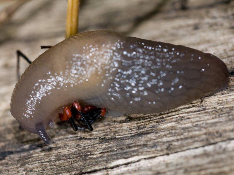 Slug vs. Spider