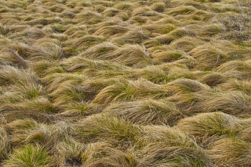 Prairie Wool